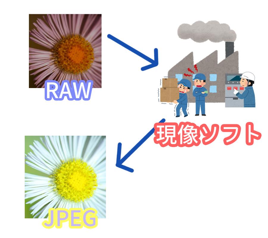 現像作業イメージ